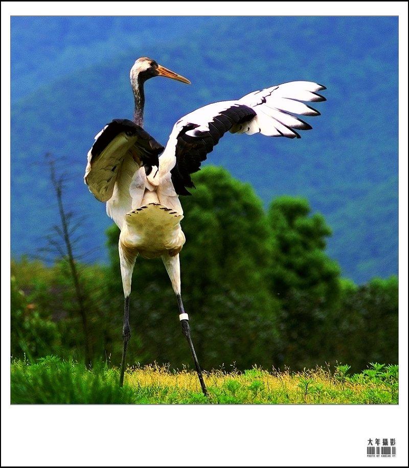 中国特有重点保护动物种群数量在世界野生动物园中居